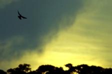 Fly (Foto: Lydia Okva Anjelia)