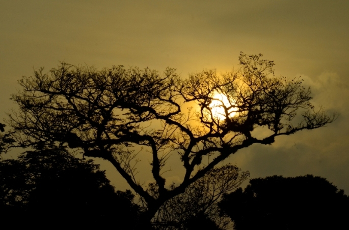 The Sun (Foto: Lydia Okva Anjelia)